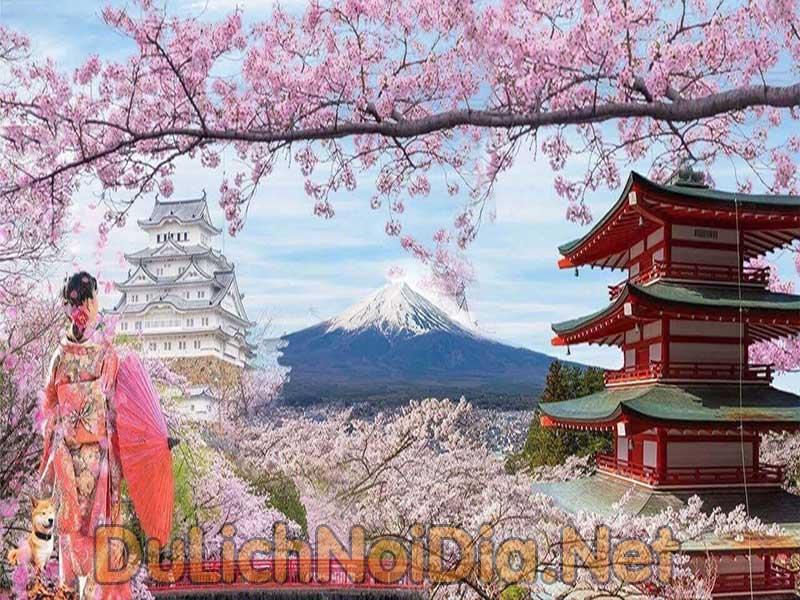 thành phố hoa anh đào Nhật Bản